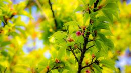 Sakura03_140224.jpg