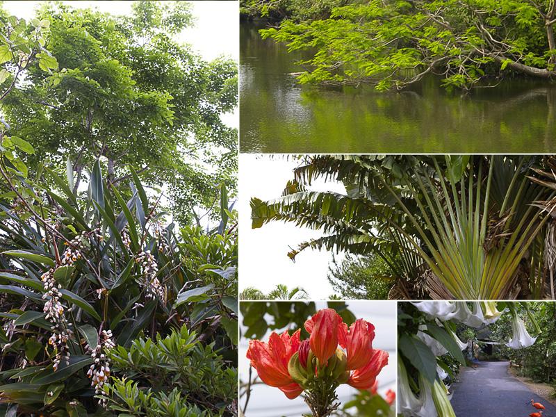 all05_plants_neop.jpg