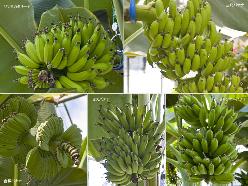 banana_02.jpg