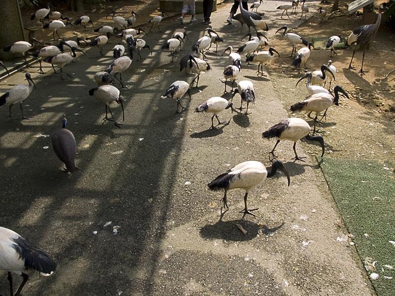 birds_shadow.jpg