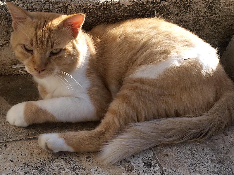 cat_101003tatsuzou.jpg