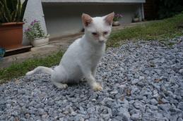 cat_daikei.jpg