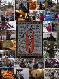 collage_hanami2013.jpg