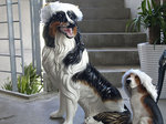 dogs_sv071225.jpg