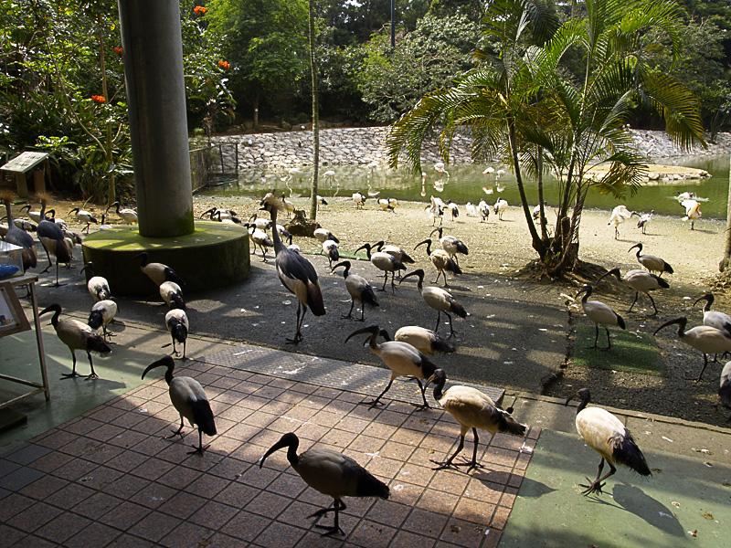 entrance_birds.jpg