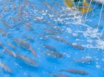 fish_catch_z.jpg