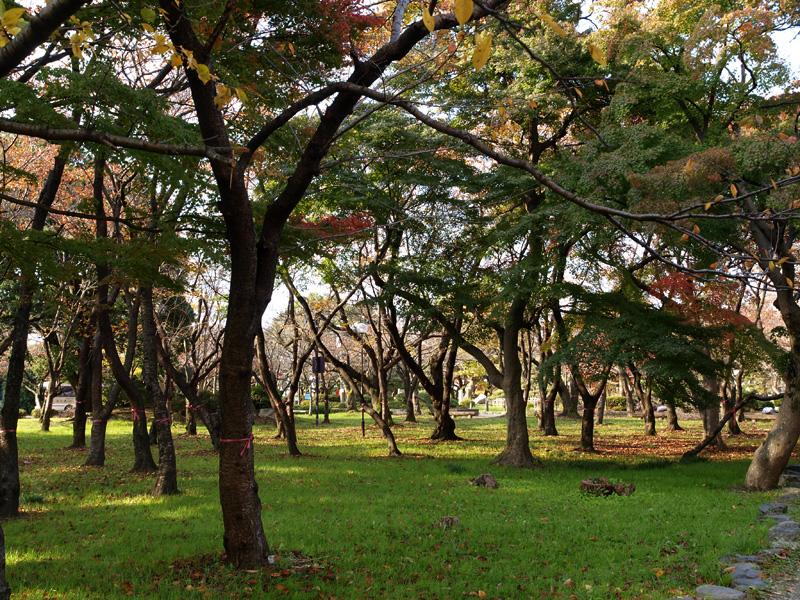 forest_nagahama.jpg