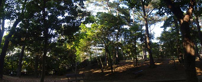 forest_pano_matsubokurip.jpg
