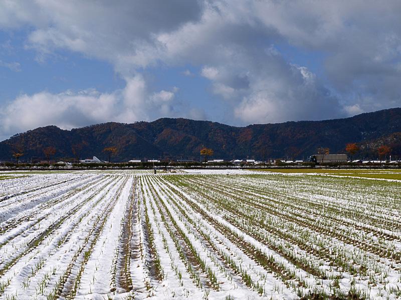 mt_snow_field_081119.jpg