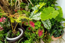 plants_seamomotoan