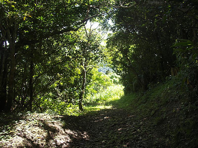 road1_hanta100911.jpg