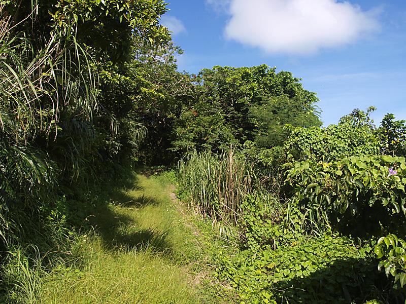 road2_hanta100911.jpg