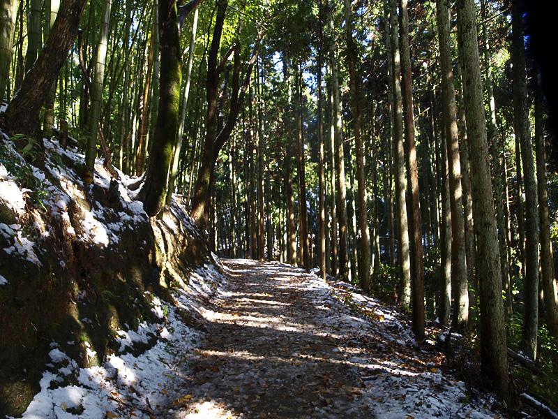 road_sugi_syakudou.jpg