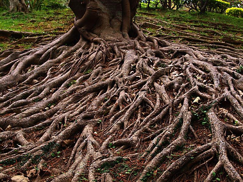 roots_morikawa110326.jpg