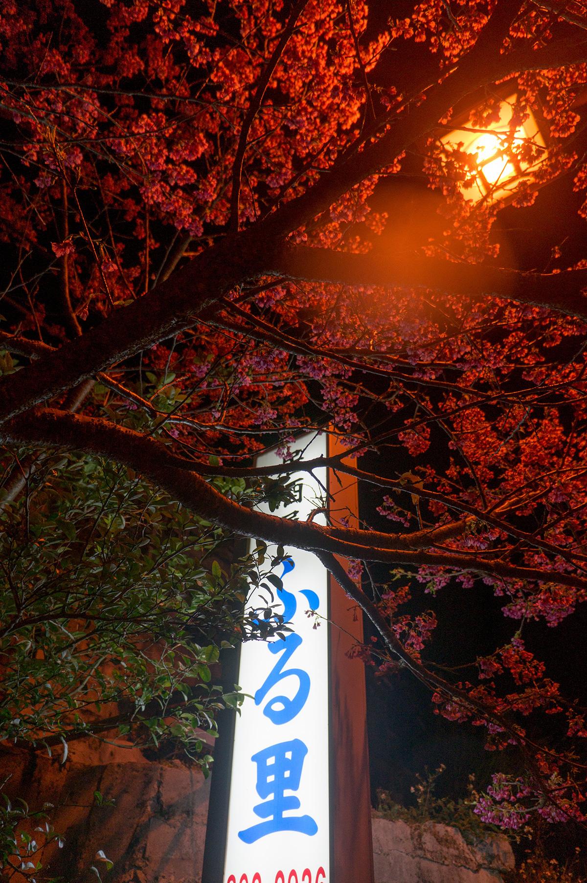 sign_sakura_furusato.jpg