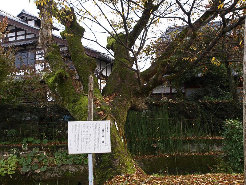 takatsuki_tree_dogan_081119.jpg