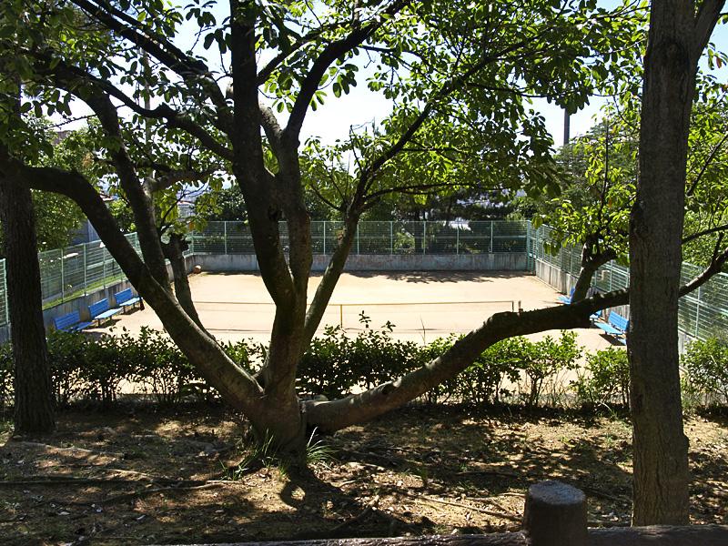 tennis_morikawa.jpg