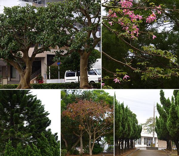 tree_all_asunaro.jpg