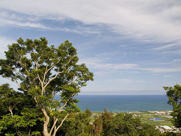 tree_sea_g.jpg