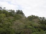 trees03_18.jpg