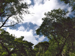 trees_miage.jpg