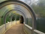 tunnel_neop.jpg